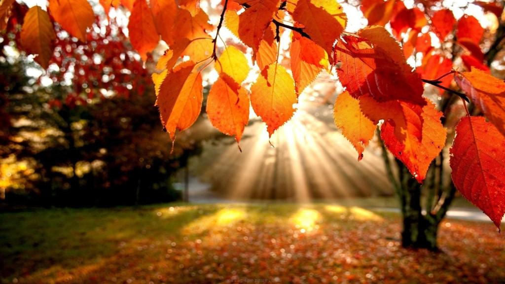Fall_image